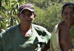 3 grunde til at redde vores regnskove