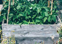 Fire fordele ved at dyrke i højbede